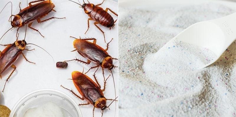 Cách diệt gián trong nhà bằng nước đường