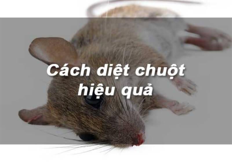 Làm thế nào để ngăn chặn và kiểm soát chuột phá hoại?