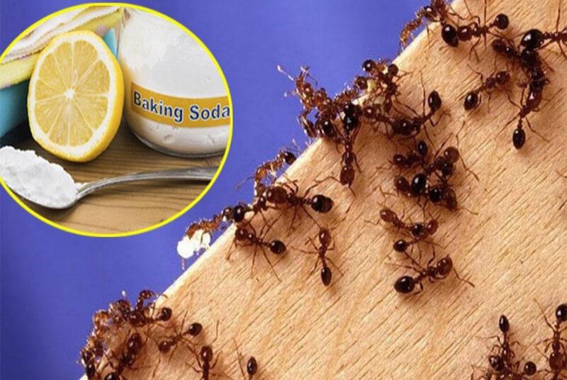 Tiêu diệt kiến trong phòng ngủ bằng bột mì