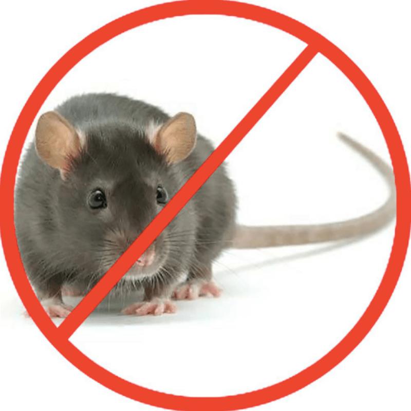 Tổng hợp những cách diệt chuột đơn giản mà bạn có thể áp dụng ngay